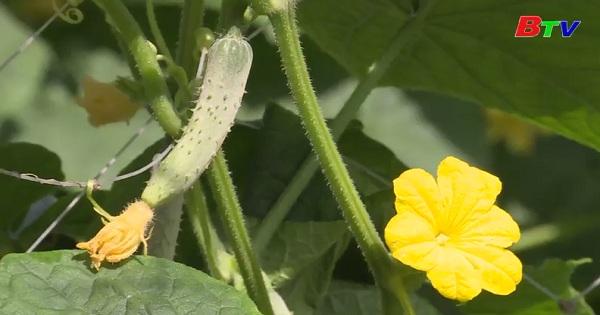 Kỹ thuật trồng rau màu an toàn hướng hữu cơ