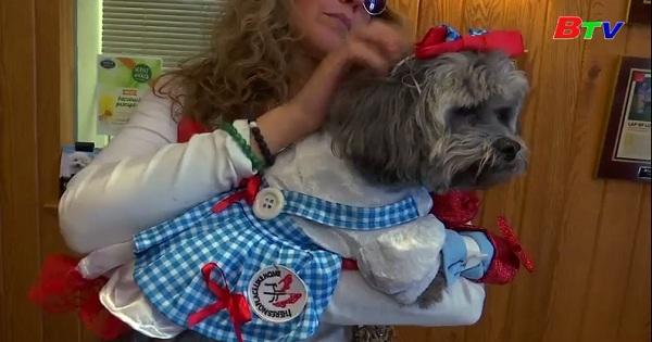 Halloween ở Mỹ - Chó cưng trở thành ngôi sao của lễ hội