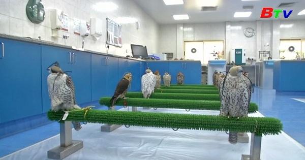 Bệnh viện chim ưng lớn nhất thế giới tại Abu Dhabi