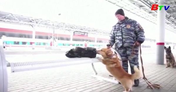 Chó cảnh sát xứ Wales Corgi duy nhất của Nga nghỉ hưu  ở tuổi thứ 9