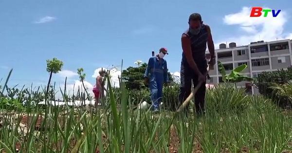 Đối mặt với khủng hoảng, Cuba kêu gọi công dân trồng thêm lương thực
