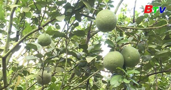 Phú Giáo hoàn thành kế hoạch sản xuất nông lâm nghiệp năm 2020