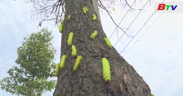 Xuất hiện sâu ăn trụi lá cây trên đường Mỹ Phước - Tân Vạn