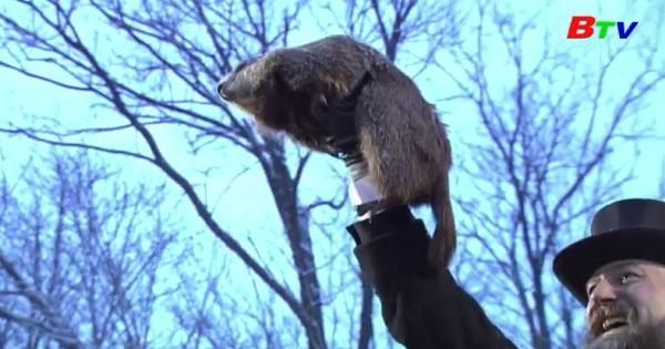 Chuột chũi dự báo mùa xuân đến sớm