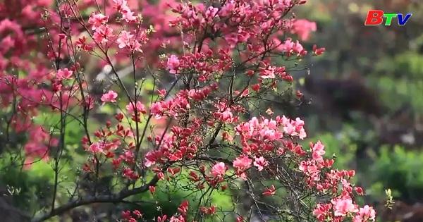 Hoa xuân bước vào điểm mãn khai thu hút đông đảo du khách