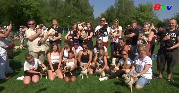 Hoãn cuộc thi đua chó quốc tế Berlin lần thứ 10