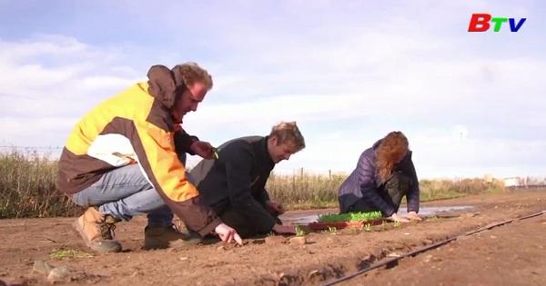 Canh tác nông nghiệp bằng nước biển ở Anh Quốc