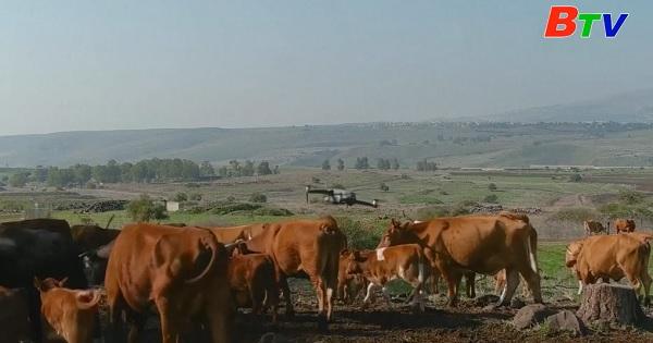 Israel - Chăn thả gia súc bằng thiết bị bay không người lái