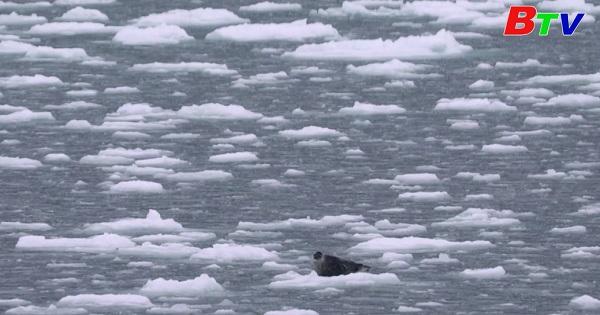 Các nhà khoa học nghiên cứu về hệ sinh thái ở Bắc Cực