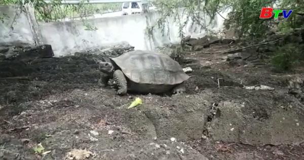 Phát hiện 2 giống rùa được cho là đã tuyệt chủng