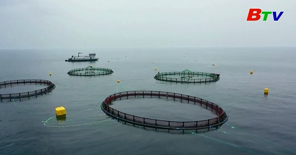 Biến đổi khí hậu đe dọa nghề nuôi cá của Qatar
