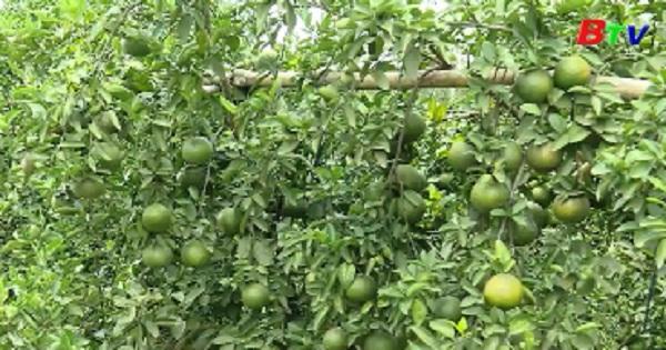 Bình Dương sản xuất nông nghiệp theo hướng giá trị gia tăng