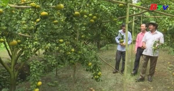Bình Dương nâng cao hoạt động kinh tế trang trại