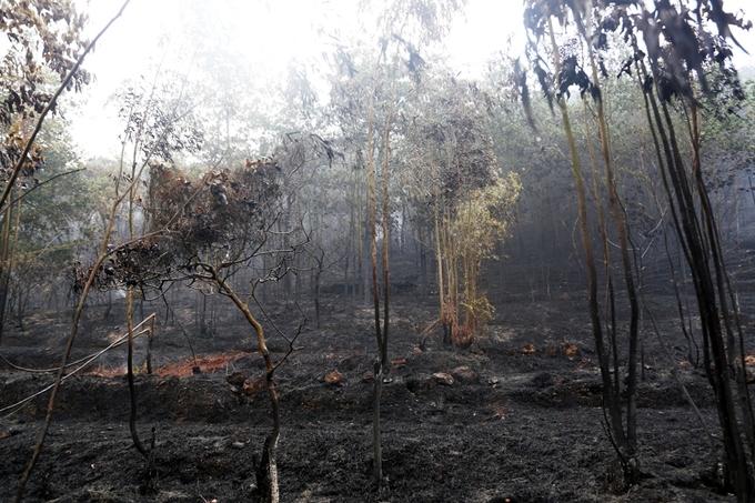 Cháy rừng Sóc Sơn - Bài học về chống hỏa hoạn mùa nắng nóng