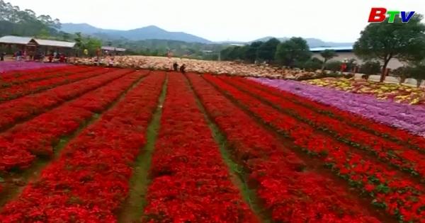 Thảm hoa mùa xuân thu hút du khách ở miền nam Trung Quốc
