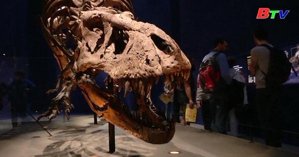 Trưng bày xương khủng long T-Rex tại bảo tàng Paris