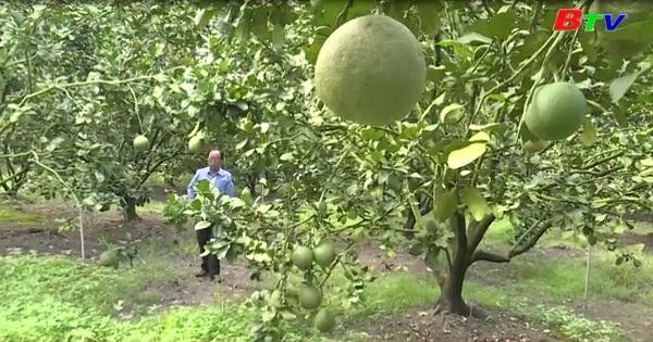 Nông dân Phú Giáo tìm kênh tiêu thụ nông sản