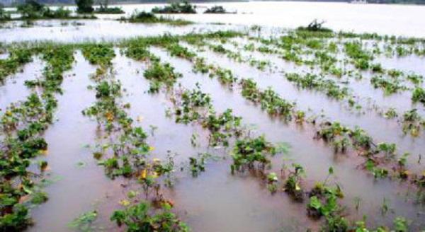 Các tỉnh từ Quảng Ngãi đến Khánh Hòa đề phòng lũ quét