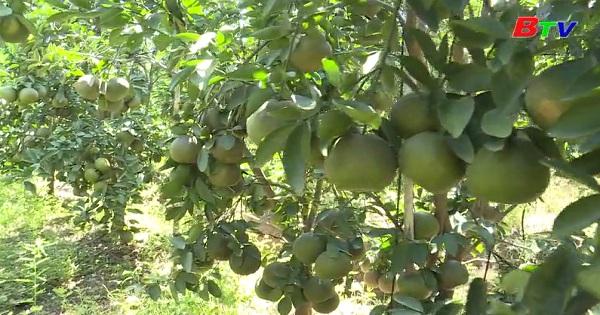Gỡ khó trong tiêu thụ nông sản