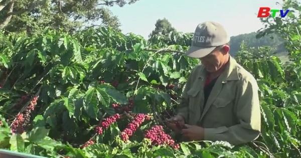 Dự báo thị trường nông sản chủ lực