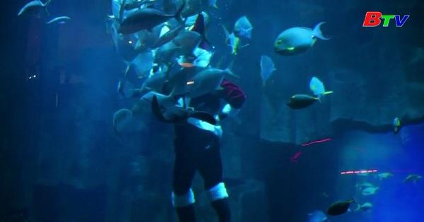 Ông già Noel lặn trong bể cá ở Paris