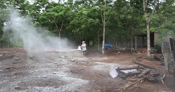 Xuất hiện ổ dịch tả heo Châu Phi đầu tiên ở huyện Đồng Phú,  Bình Phước