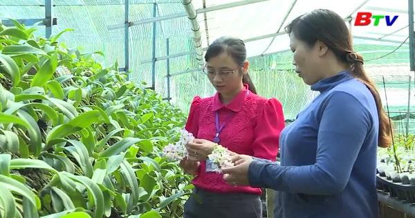 Làm giàu từ nghề trồng lan