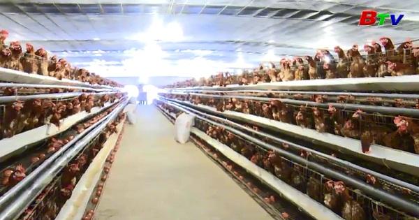 Phát triển kinh tế trang trại trên vùng đất Phú Giáo