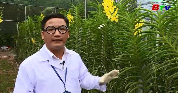 Nhân giống hoa lan bằng phương pháp cấy mô