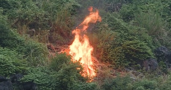 Chủ động phòng cháy rừng ở mức cao nhất