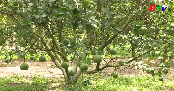 Tấm gương nông dân làm kinh tế giỏi trên địa bàn huyện Dầu Tiếng