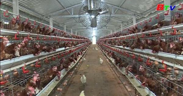 Phước Sang - Sức bật từ các mô hình kinh tế trang trại