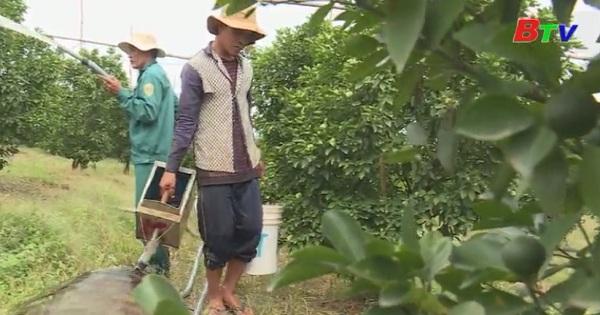 Các yếu tố cần thiết trong sản xuất nông nghiệp hữu cơ - Organic