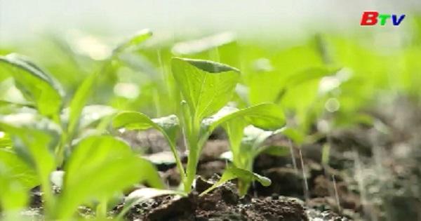 Nông sản an toàn từ sản xuất hữu cơ