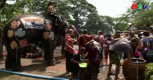 Những chú voi tham gia Lễ hội té nước Songkran ở Thái Lan