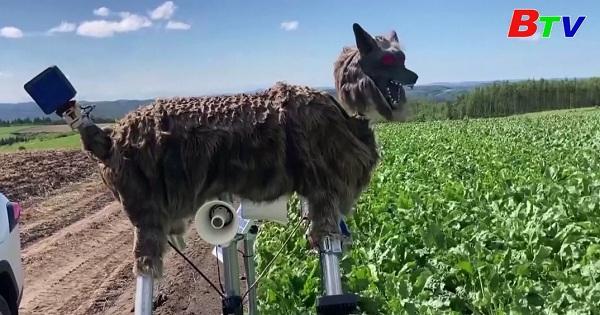 Nông dân Nhật Bản sử dụng Robot Sói để bảo vệ mùa màng