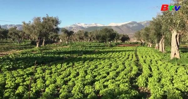 Thời tiết xấu ảnh hưởng  các vựa rau ở Hy Lạp