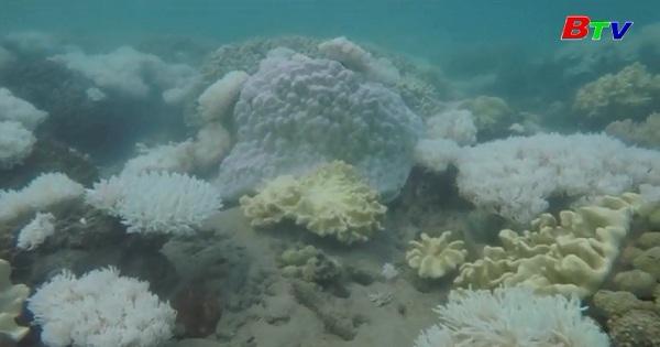 Rạn san hô Great Barrier bị tẩy trắng chưa từng có tiền lệ