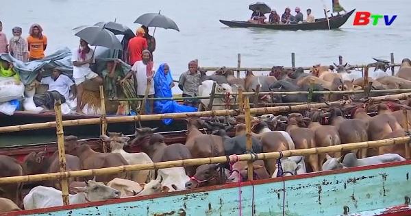 Mưa lớn cản trở việc mua bán gia súc ở Bangladesh