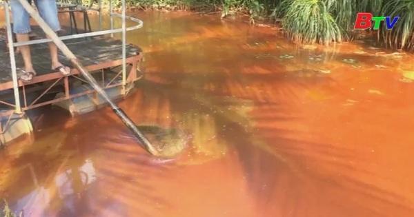 Nước đổi màu lạ khiến cá chết hàng loạt tại phường Chánh Mỹ, Tp.Thủ Dầu Một