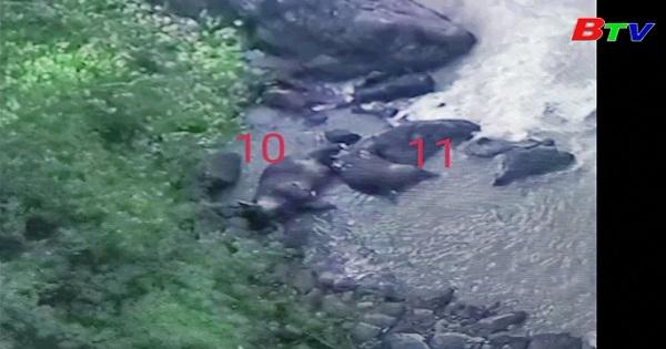 Thái Lan - 11 con cá voi đã chết do rơi xuống thác nước