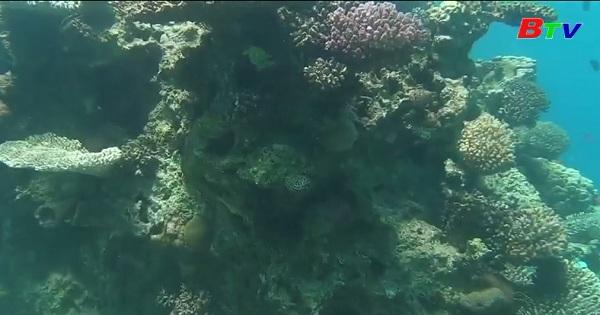 Trả lại môi trường sống cho rạn san hô Eilat