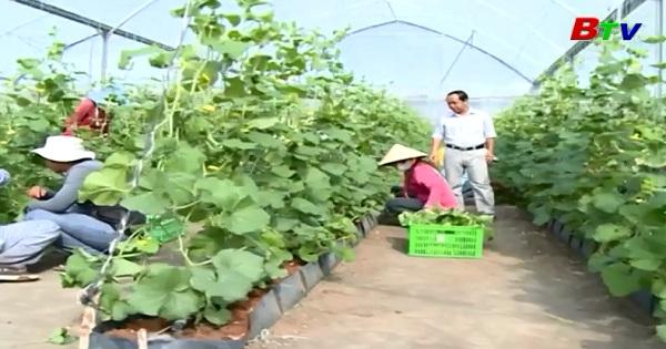 Nông nghiệp công nghệ cao ở Phú Giáo