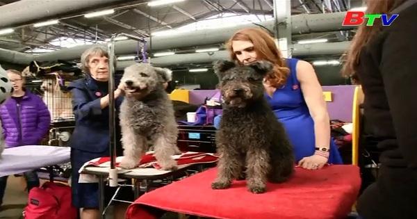 Westminster Kennel Club tổ chức cuộc thi chó đẹp lần thứ 141