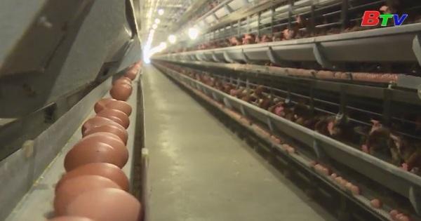 Phát triển nông nghiệp công nghệ cao ở Bình Dương