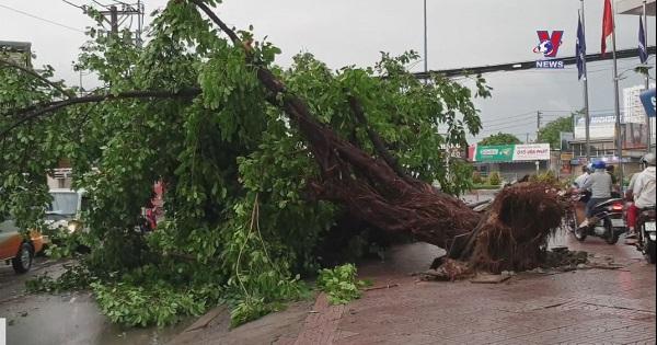 Cây xanh bật gốc, ngã đổ trong mưa giông tại TP.Hồ Chí Minh