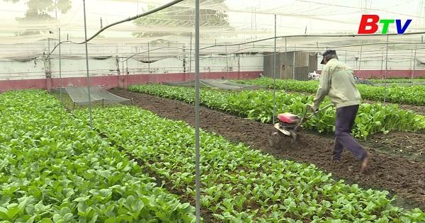 Trồng rau ăn lá hướng hữu cơ