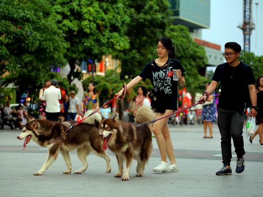 Quy định quản lý chó thả rông tại các nước trên thế giới