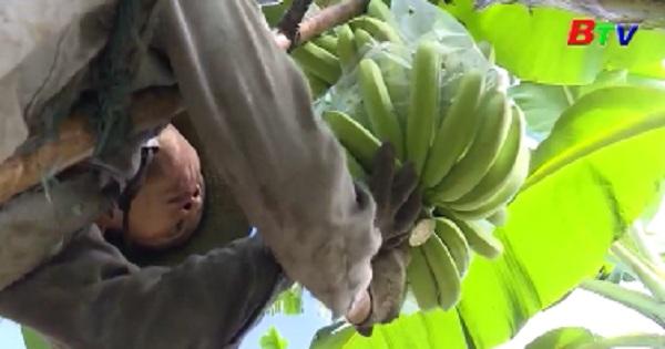 4 khu nông nghiệp công nghệ cao ở Bình Dương hoạt động hiệu quả