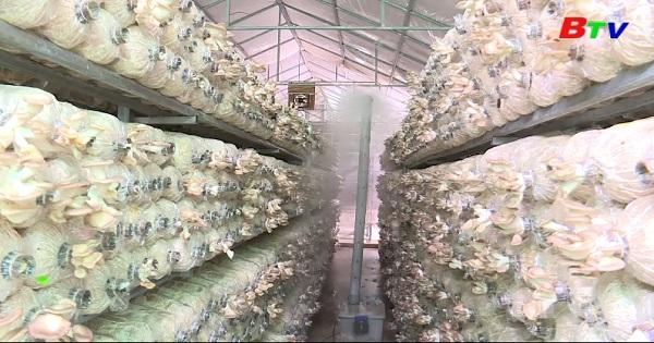 Giấy chứng nhận VietGAP - Giấy thông hành cho nông sản Việt